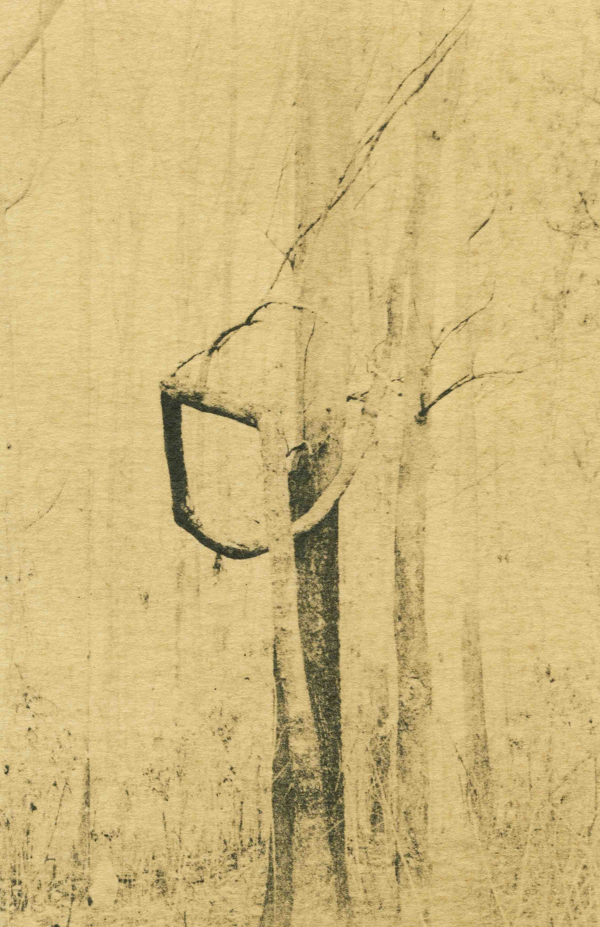 web-fundacio-cabanas-exposicio-temporal-fotografia-andrei-farcasanu-the-quiet-sense-of-nature-5